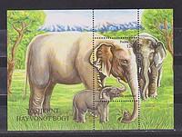 Elefánt